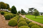 Boxwood rows and lebanon cedar in Amboise garden
