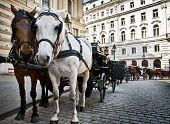 Horse Driven Carriage At Hofburg Palace Vienna