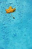 Yellow Leaf And Drops On The Blue Waterproof Material