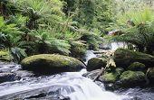 Australia Queensland stream in rainforest