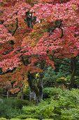 Japan Nikko Rinnoji Temple Maple trees in Fall colors