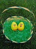 Chicks In A Basket