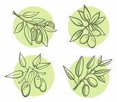 Drawing Olives Set