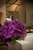 foto of orquidea  - Bouquet of pink orchids in a room.