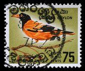 CEYLON - CIRCA 1966: A stamp printed in Ceylon shows Black-hooded Oriole - Oriolus xanthornus, circa 1966