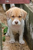 Pity Puppy Abandoned