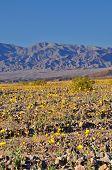 Death Valley In Spring