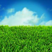 closeup of grass over the blue sky with a retro effect