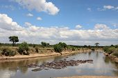 Hippopotamus in the Mara river in the Masai Mara reserve in Kenya Africa