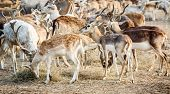 foto of deer family  - the deer family living in the zoo - JPG
