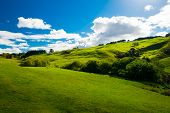 picture of southern  - Beautiful green rolling hills of Southern New Zealand at dusk - JPG