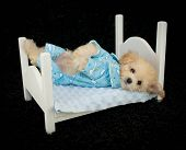 picture of pajamas  - A cute little puppy laying in a bed wearing pajamas all ready for bed - JPG