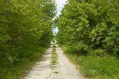 Rural Road Between Trees