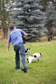 Man Throwing Stick To Dogs