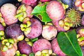 Fresh Fruit Mangosteen
