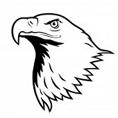 Bald eagle, American eagle.