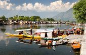 Shikara boats on Dal Lake with houseboats in Srinagar