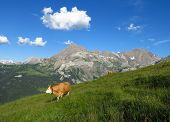 Summer Scene In The Swiss Alps