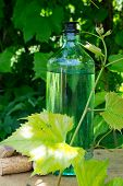 White wine bottle, young vine in the garden