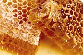 Wax Honeycombs With Honey - Close Up