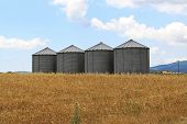 picture of silos  - Four steel grain silo towers in wheat field
