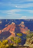 Plants, red peaks and blue sky are the theme on South rim of Grand Canyon, Arizona