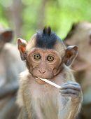 Cute Infant Monkey