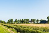 Ripening Corn And An Historic Farm
