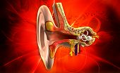 stock photo of inner ear  - digital illustration of Ear anatomy in colour background - JPG