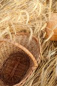 empty basket whit bread in field of wheat