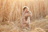 cat in field of wheat