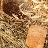 empty basket  bread in field of wheat