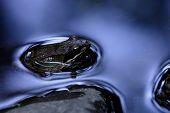 Agile Frog (rana Dalamtina)