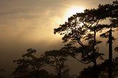The Sun Breaks Through The Mist