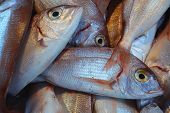 image of mullet  - Fresh red mullet fish at the market - JPG