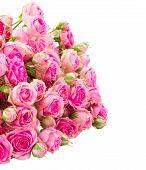 heap of fresh pink roses