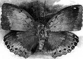 grunge butterfly background