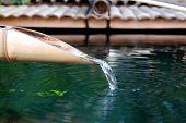 Bamboo Water