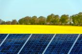 Solar panels in a rapeseed field