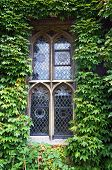 Gothic window overgrown with green ivy