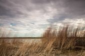 Reeds On The Baltic Sea