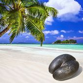picture of coco  - Seychelles islands  - JPG