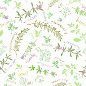Seamless Pattern With Aromatic Herbs And Cute Titles