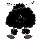 Funny black sheep turning back.