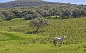 stock photo of prairie  - wild Horse frolics freely in a prairie meadow - JPG