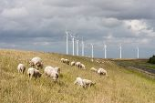 stock photo of dike  - Grazing sheep at a dike with some big windmills behind them - JPG