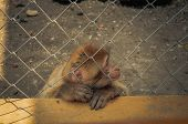 image of baby-monkey  - Baby monkey in the park in a cage - JPG