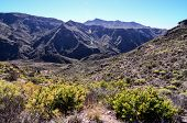picture of canary  - Big Valley in Gran Canaria - JPG