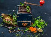 stock photo of oregano  - Mill for spices with basilicas and oregano on a dark background - JPG