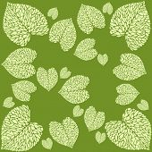 image of calla  - pattern from leaves of calla lilies on bright background - JPG